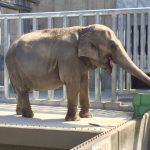 無料でゾウ、恐竜に会える!岡崎東公園へお出かけ