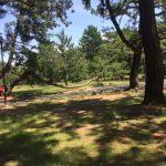 【子供の遊び場】豊橋市の高師緑地公園は日陰が多め!
