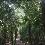 【子供の遊び場】豊橋岩屋緑地公園は山の中にアスレチック!?