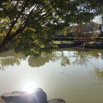 【子供と遊ぶ】豊田市山之手公園は写真映えのする地元に人気の公園
